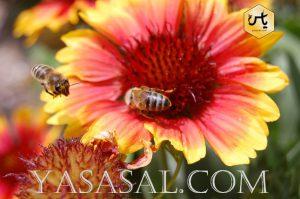 قیمت عسل خرید عمده عسل