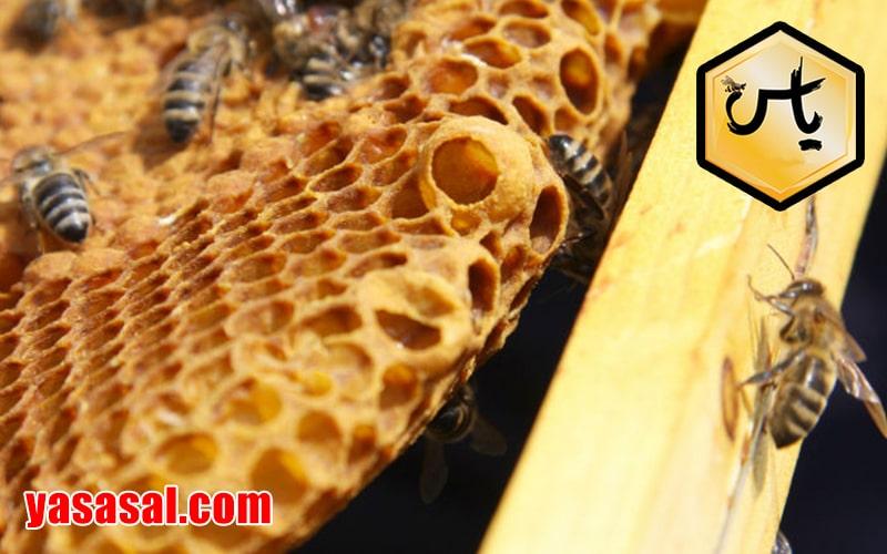 قیمت عسل بهترین عسل طبیعی