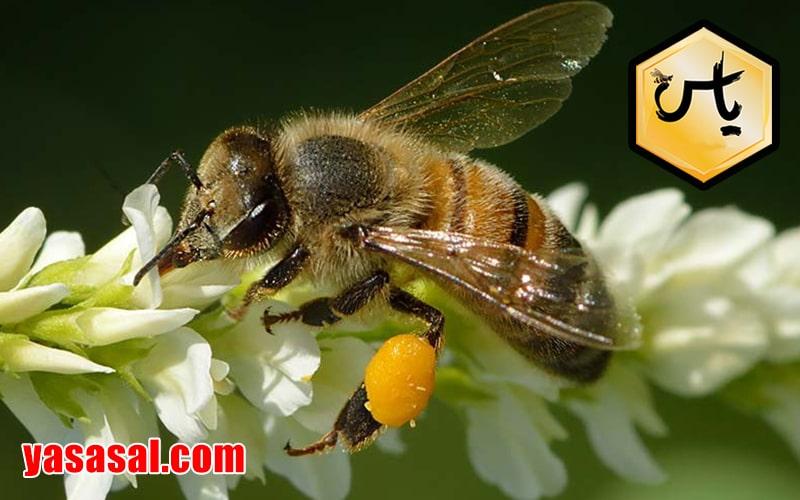 قیمت عسل بهارنارنج درجه یک