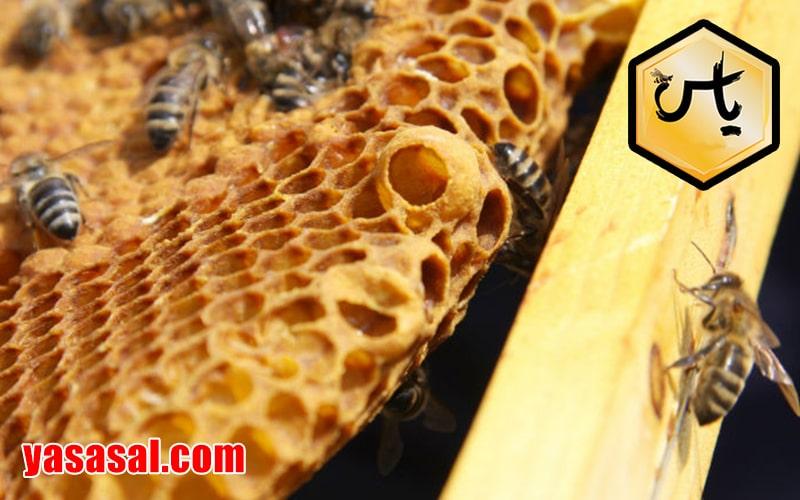 قیمت خرید عسل وحشی