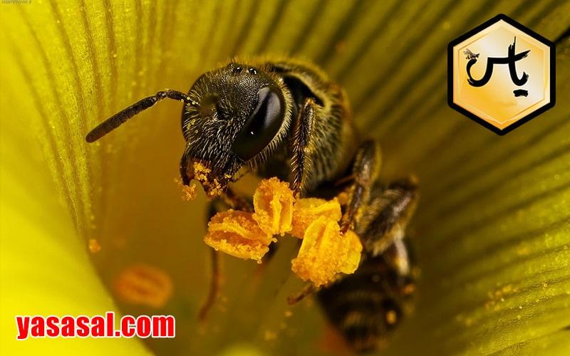 قیمت گرده گل عسل