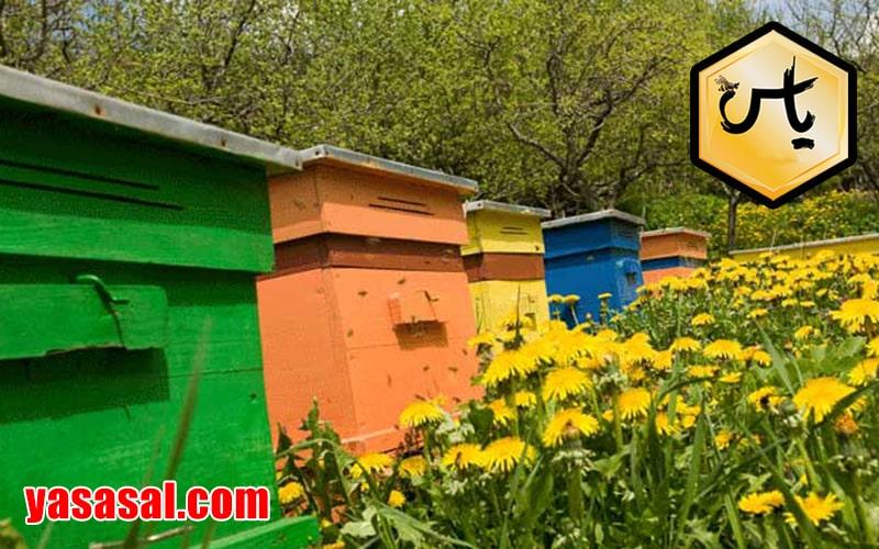 قیمت عسل چهل گیاه مرغوب