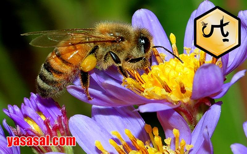 قیمت عسل چندگیاه درجه یک