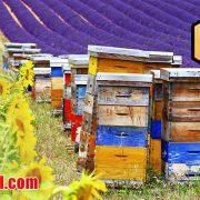 قیمت عمده عسل