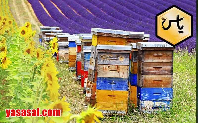 قیمت عسل خالص چندگیاه