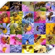 عسل طبیعی چند گیاه