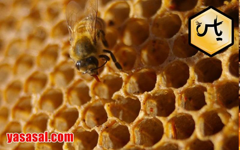 مرکز عسل