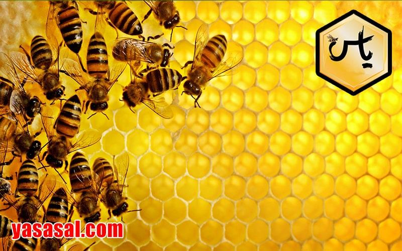 شرکت صادرات عسل
