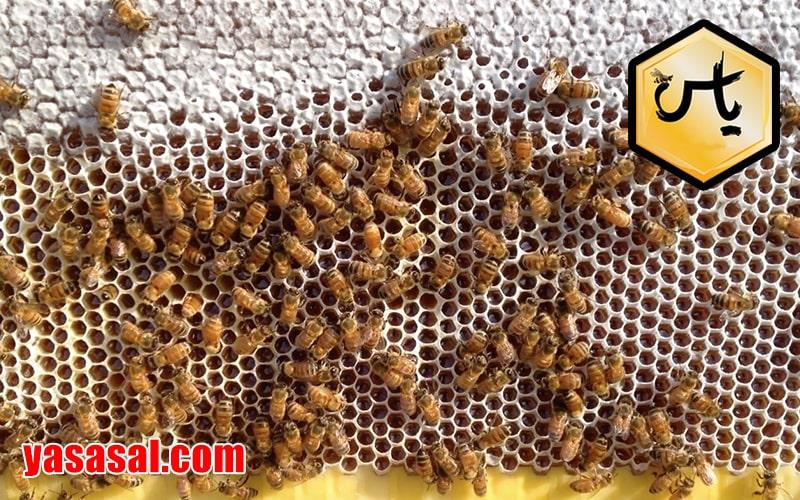 قیمت عسل ایران