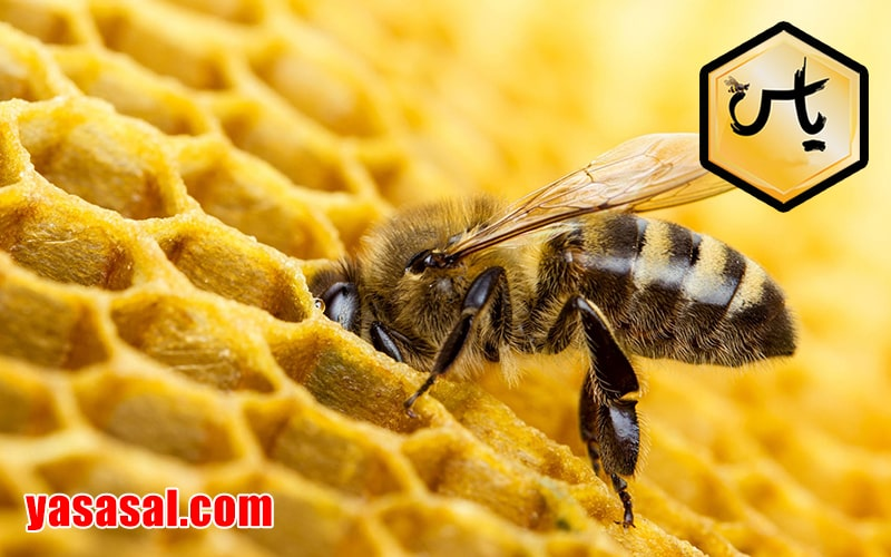 موم زنبورعسل
