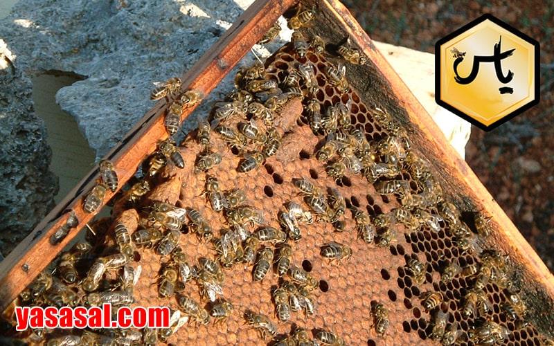 عسل طیبیعی