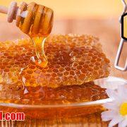 خرید عسل اکالیپتوس