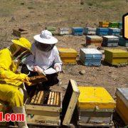 قیمت عسل طبیعی گون